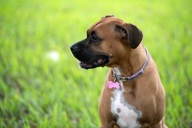 <p>The best dog collars and leads for 2021</p>