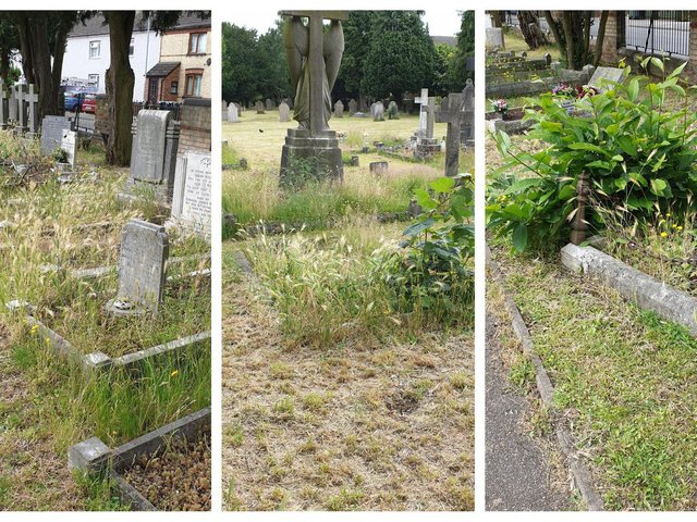Drove Road Cemetery this morning (June 24). Photos: Carol Clark.