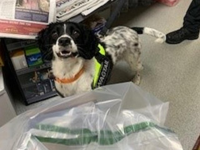 Sniffer dogs have put their noses to good use helping Central Bedfordshire Council's Trading Standards Team seize illegal tobacco